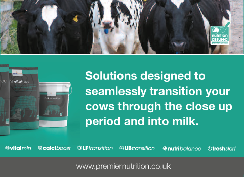 Solutions designed to seamlessly transition your cows through the close up period and into milk.